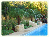 Palm Tree next to pool from palmtreedirect.com