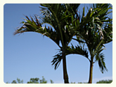 breakfast on patio next to palm tree from palmtreedirect.com