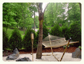 Coconut Palm Tree and hammock from palmtreedirect.com