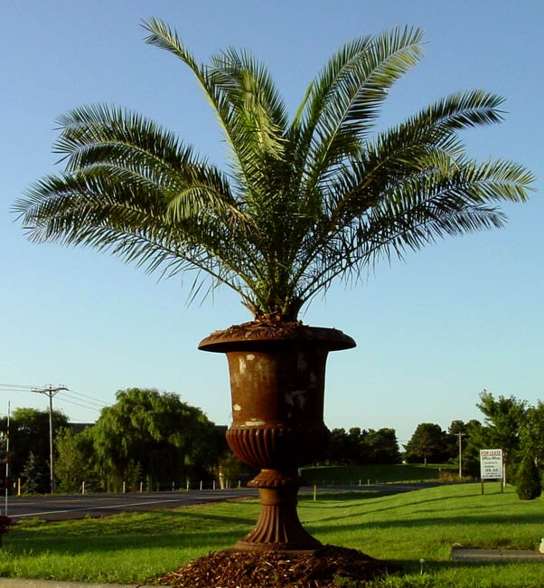 Palm Tree Island: Varieties & Pricing